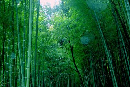 Arashiyama Area